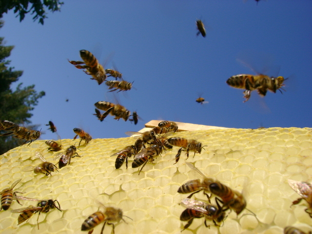 bees-flying-in-blue-sky-1355797-640x480